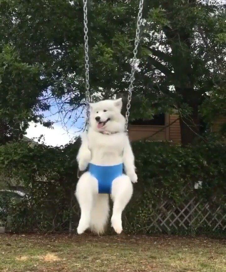 Little one enjoying the swing