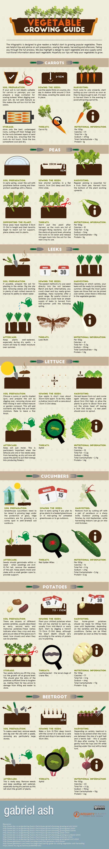 ¡Come tus vegetales! Una guía de cultivo de huerta  #cultivo #gardentypesyards #guía #huerta #tus #una #vegetales