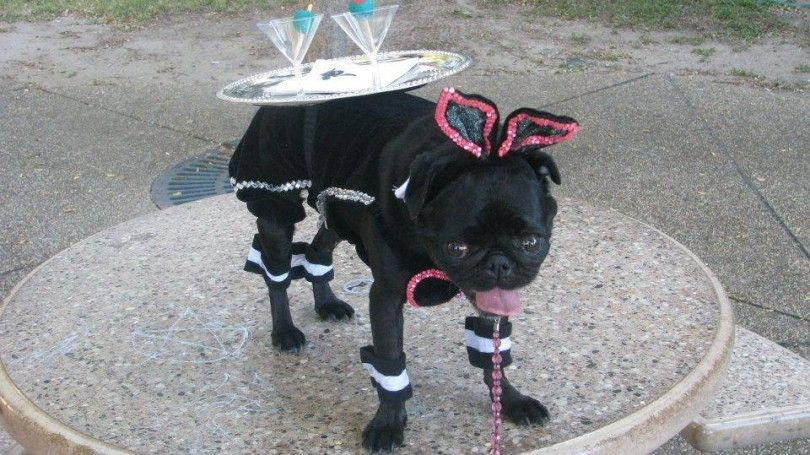 22 Unique Dog Costume Ideas For Halloween Dog Costumes Dog