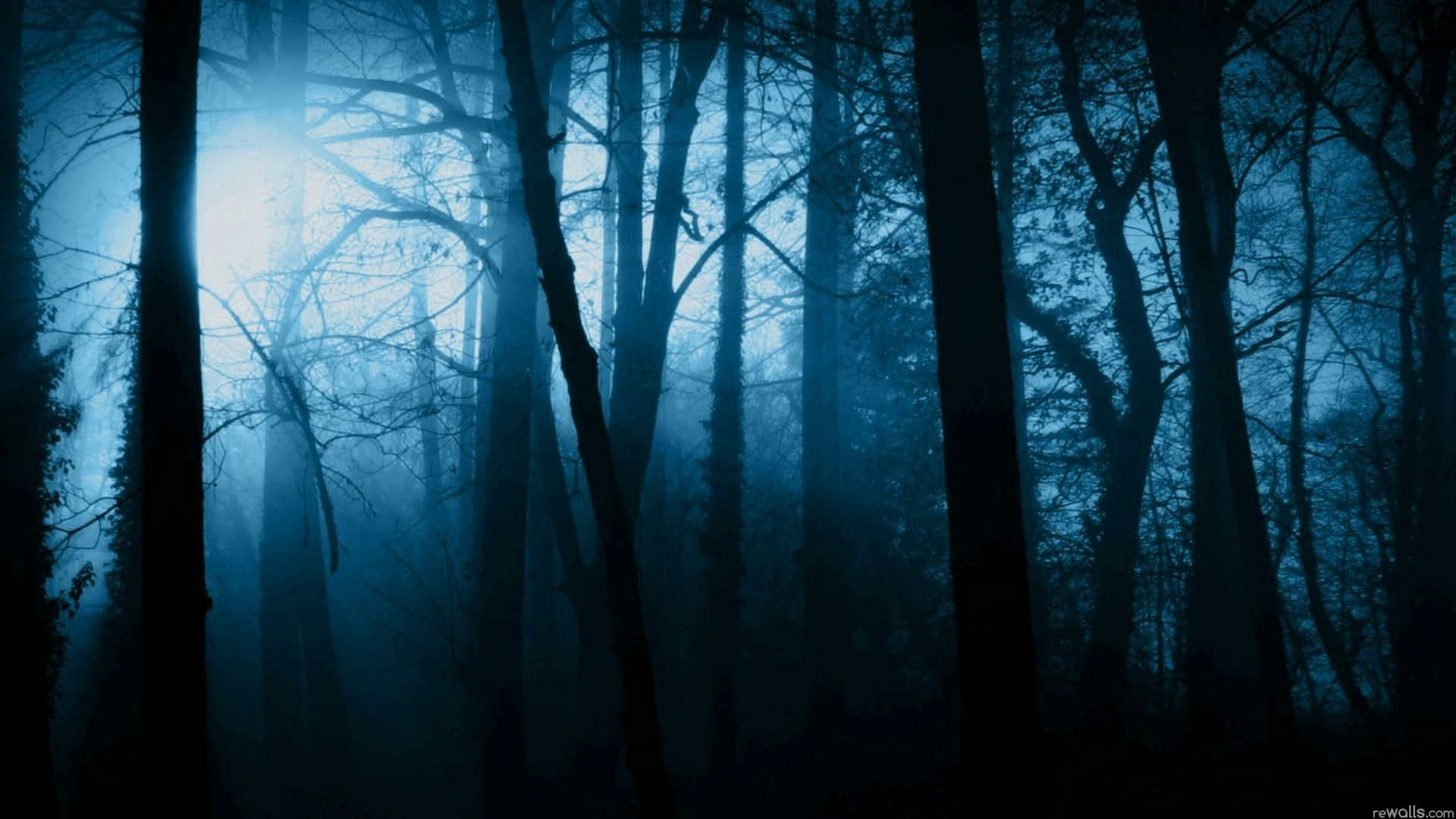 Scary Forest In 2019 Forest Pictures Night Forest Dark