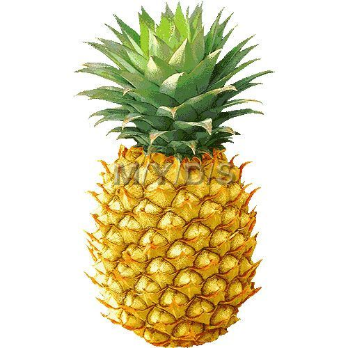 Pineapple realistic. Clipart free clip art