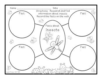 Comparing and Contrasting Insect and Spider Activities