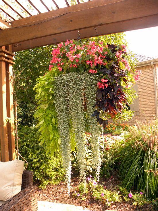 Sensational 15 Hanging Plants Design Ideas For Your Home House Plants Download Free Architecture Designs Scobabritishbridgeorg