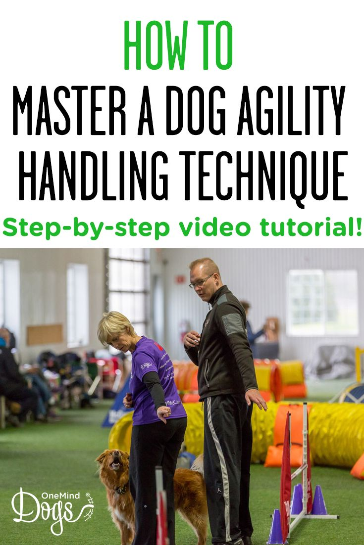 Steps To Master A Dog Agility Handling Technique The Road From