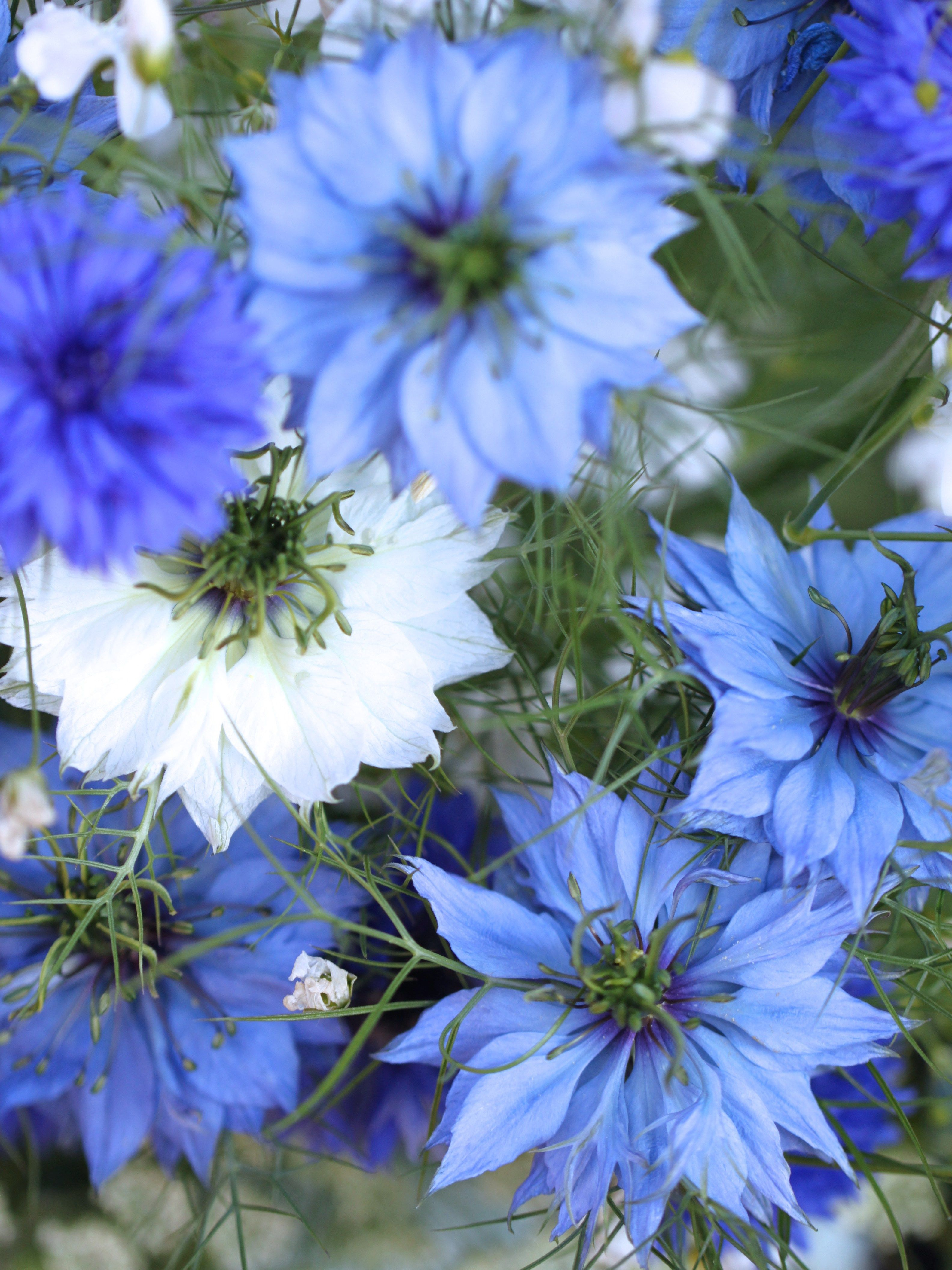 Annual Flower Seeds To Sow This Autumn