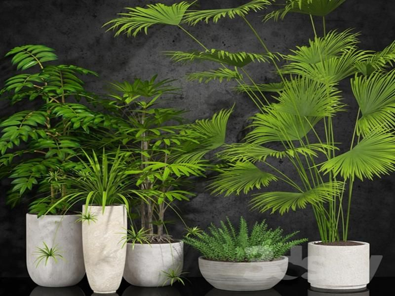 175 Plant 175 3dsmax Model Free Download Plants Plant Collection
