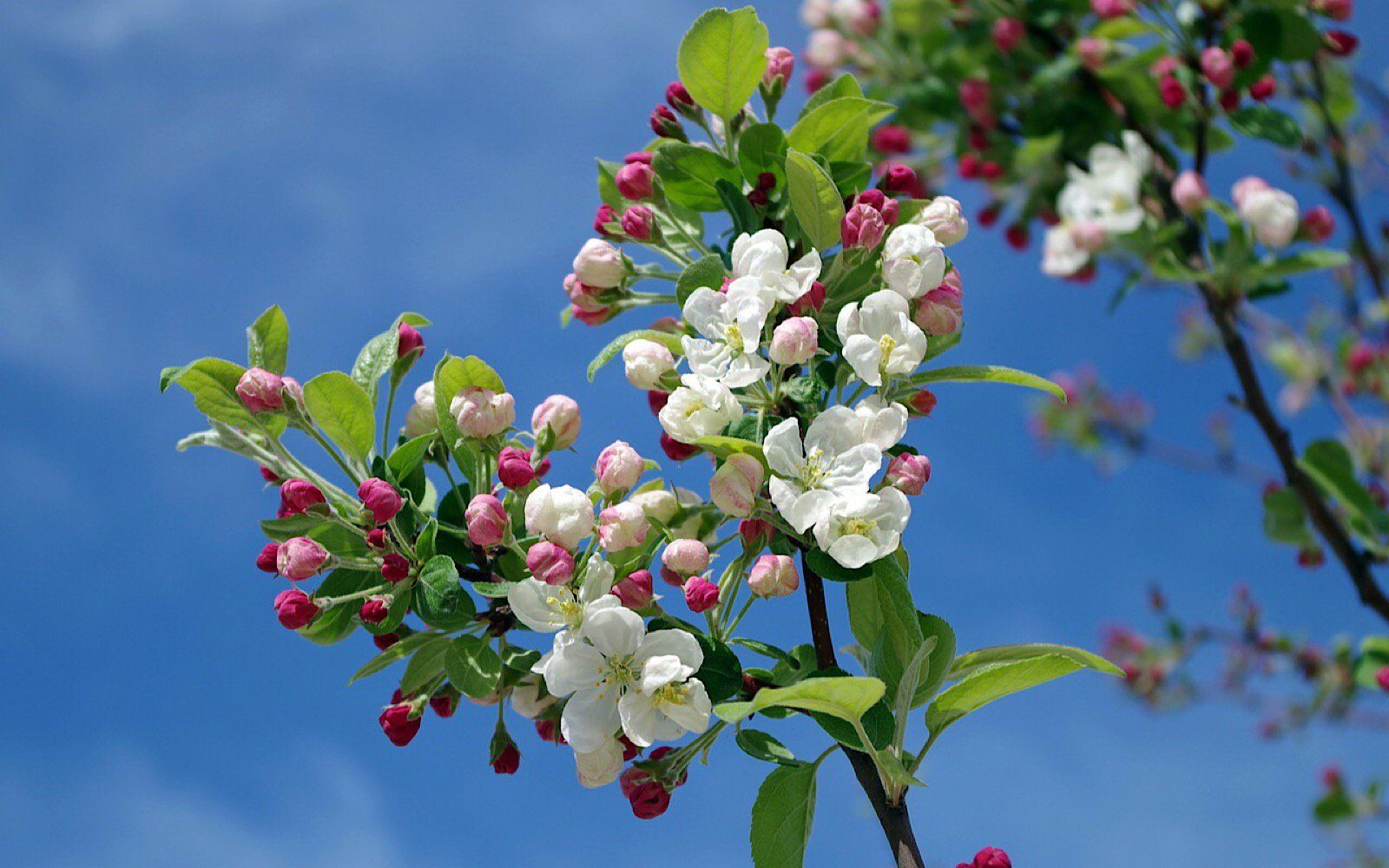 Why You Should Plant Fruit Trees In The Yard And How To Do It White Flowering Trees White Flowers Planting Flowers