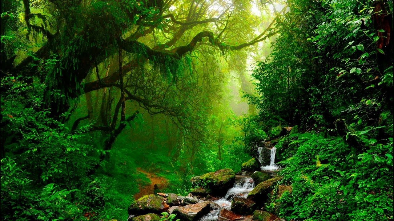 Bamboo Forest Photography Beautiful
