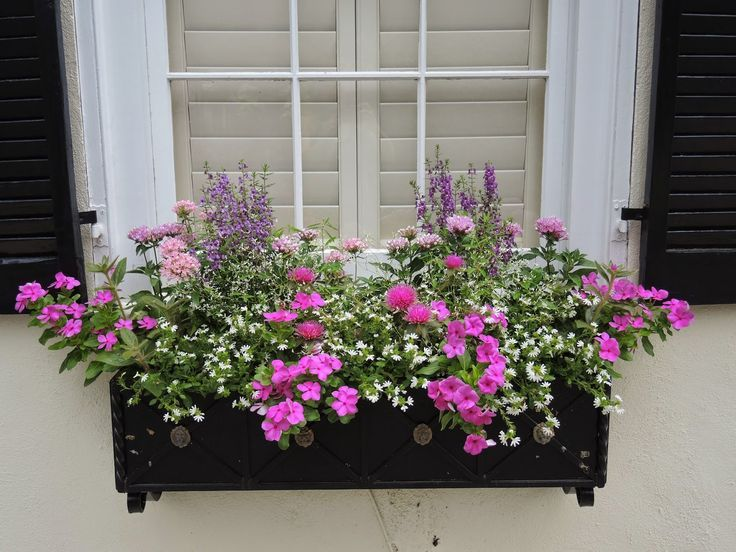 How To Arrange A Window Box With Images Window Box Flowers
