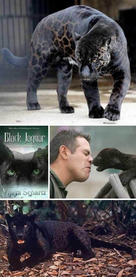 Black Beauties 10 Amazing Melanistic Animals Page 2 Of 2 Webecoist Melanistic Animals Animals Melanistic