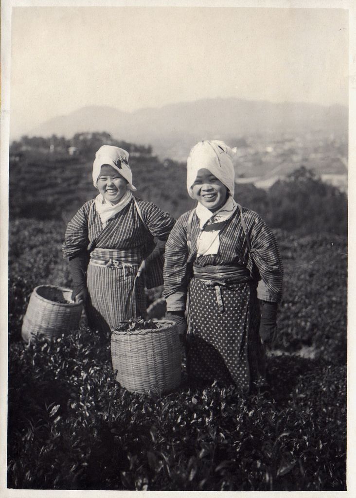 Rarely Seen Pictures Show The Farm Work In Japan Over 100 Years