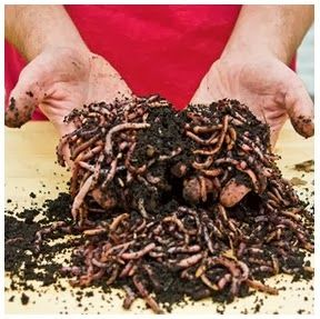 Vermicomposting: How To Build Your Own Indoor Worm Bin  No room for