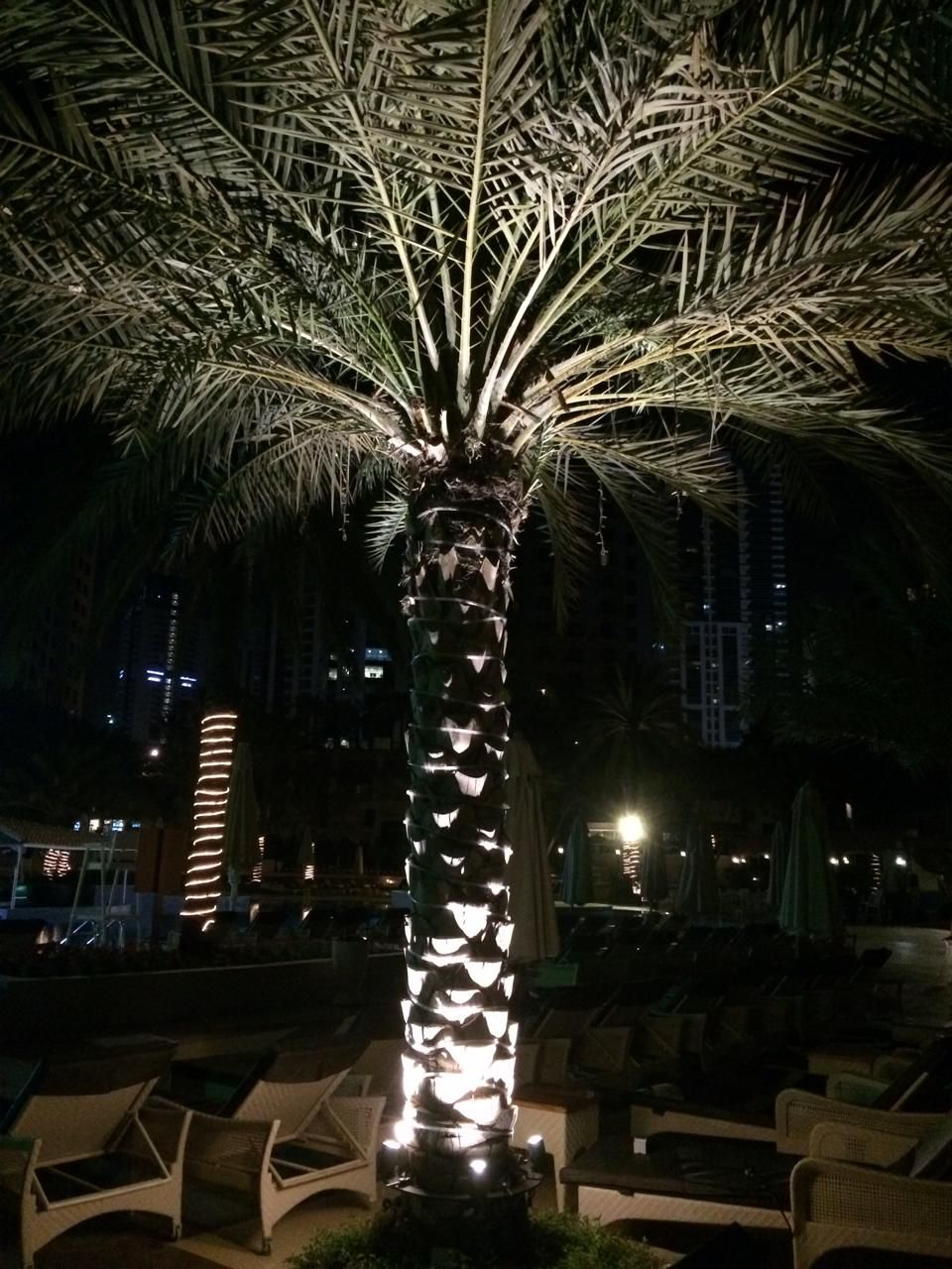 This Is Effective Way To Light Up A Palm Tree With Ring Uplighter Lumo Lumofze Dubai Garden Landscape
