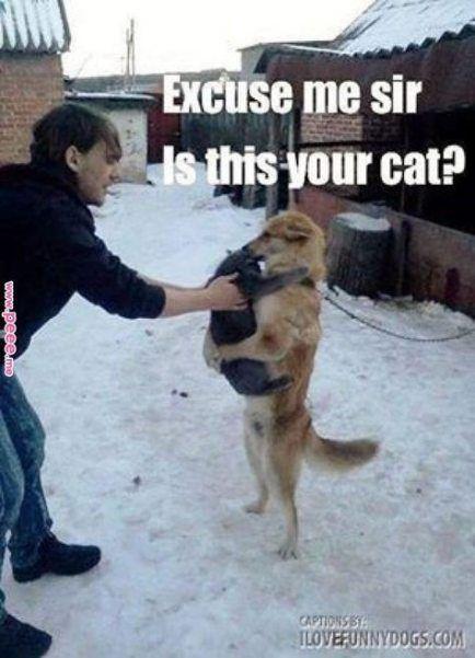 Funny animals memes make me laugh friends 54 trendy Ideas #cuteanimalhumor