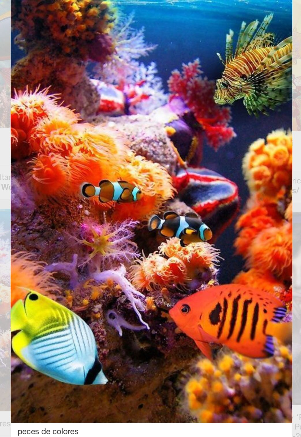 Sinfonía de colores en el mar   SIRENAS!   Pinterest