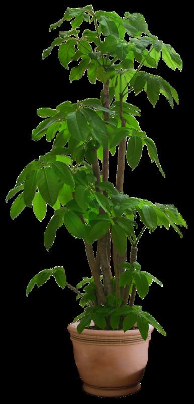 Pingl par elodie saphoret sur jardinerie pinterest for Plantes jardinerie