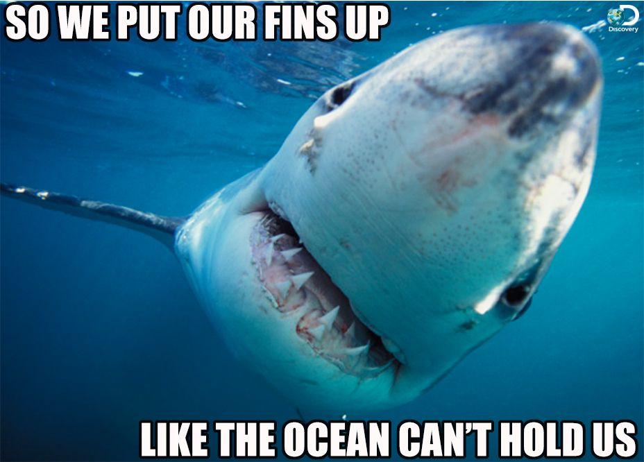 LIKE A GREAT WHITE SHARK ON SHARK WEEK! (Countdown