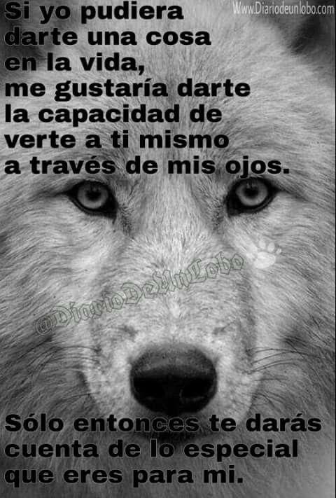 X Su Puesto Loboscãescavalos Frases De Lobos Lobos