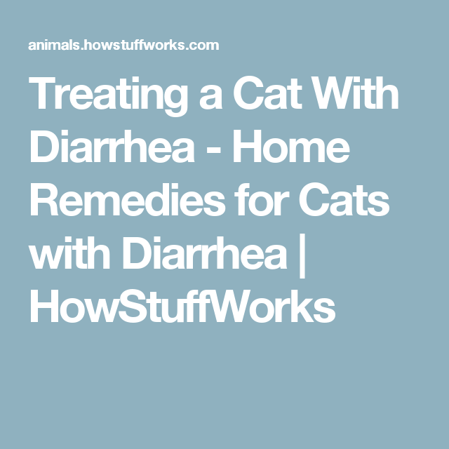 Home Remedies For Cats With Diarrhea Home Remedies Home Remedies For Diarrhea Cat Diarrhea