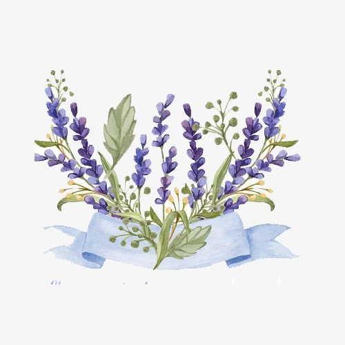 This Png Image Lavender Flower Transparent Png Clip Art Is Available For Free Download Lavender Flowers Watercolor Flowers Flower Backgrounds