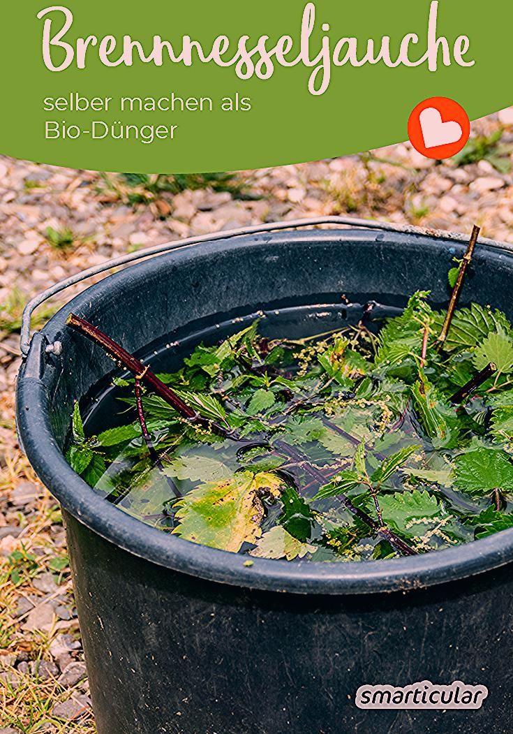 Brennesseljauche Ist Der Ideale Bio Dunger Der Brennesselsud Lasst Sich Ganz Einfach Aus Dem Vermeintlichen Un In 2020 Hydroponic Gardening Plants Planting Vegetables