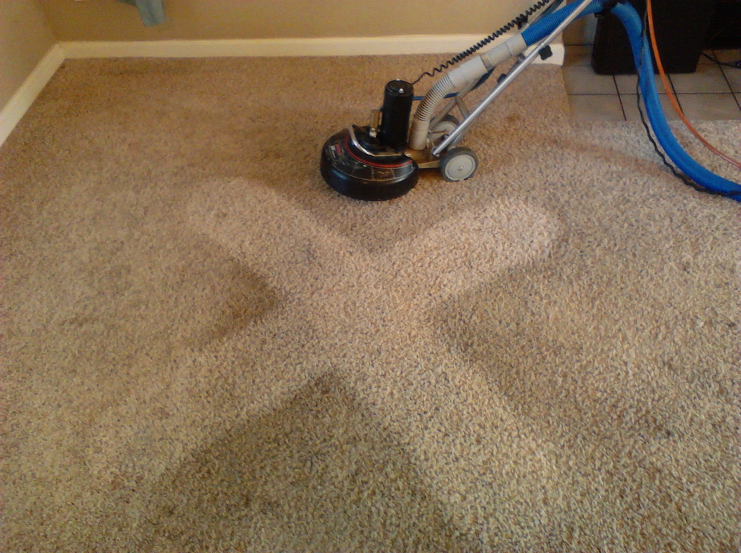 Need Carpet Cleaning Sunshine Coast Call Tip Top For