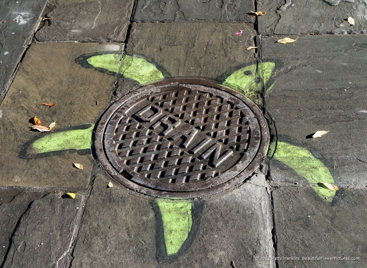 Turtle Street Art, French Quarter, New Orleans © 2018 Patty Hankins