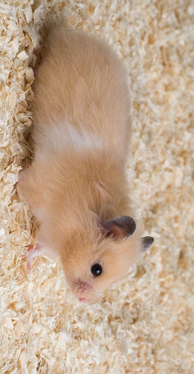 Cute Baby Animals Live Wallpaper Cute Hamsters Cute Baby Animals Cute Animals
