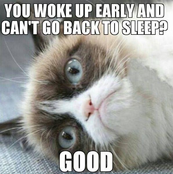I Can T Sleep Jokes Funny Good Morning Grumpy Cat Grumpy Cat Humor Funny Grumpy Cat Memes Grumpy Cat Quotes