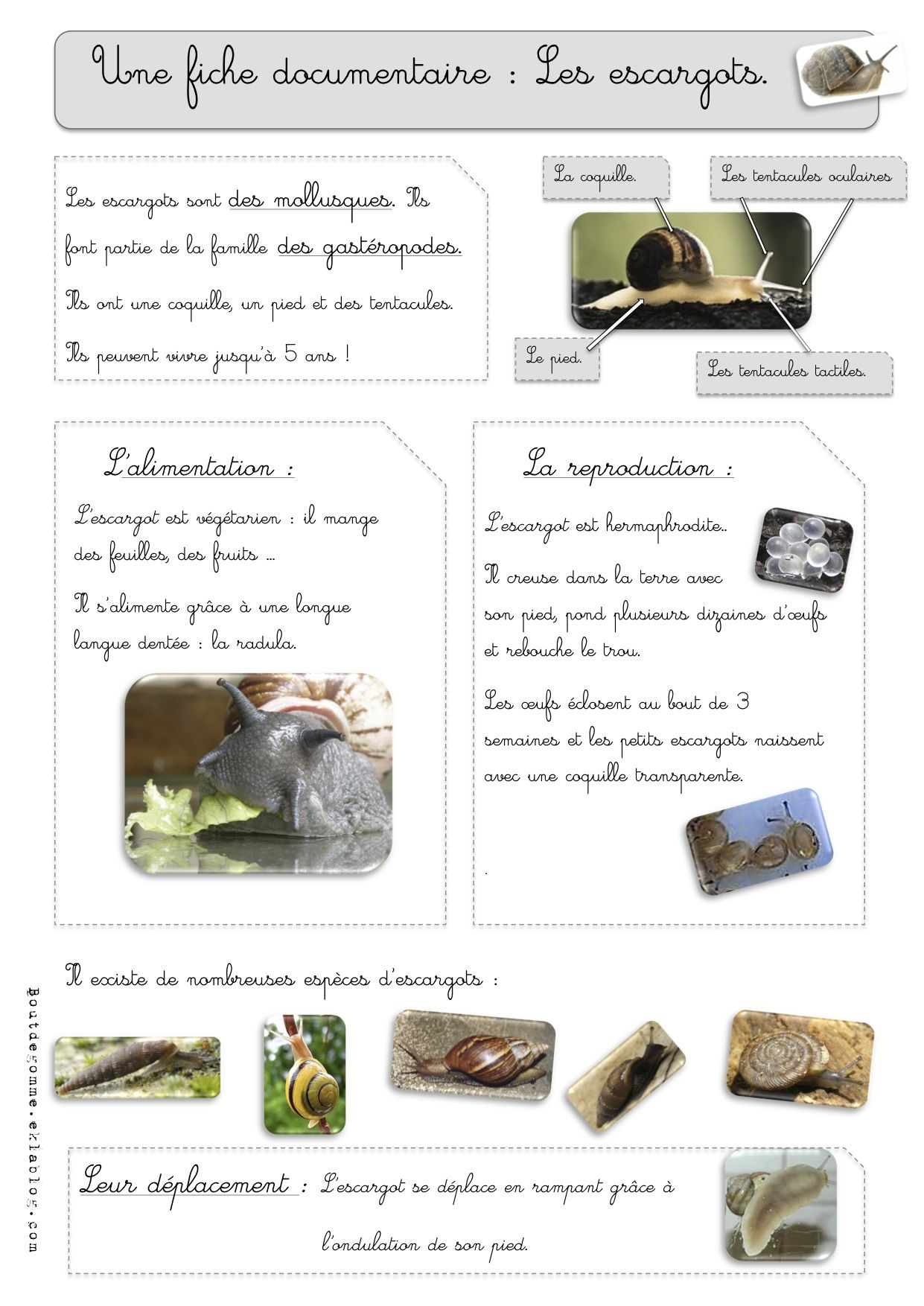 sciences les escargots observations schleeck escargot escargot maternelle et ce1. Black Bedroom Furniture Sets. Home Design Ideas
