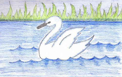Swan Drawing   My First Sketch – Swan on Lake   Chris and Jenni