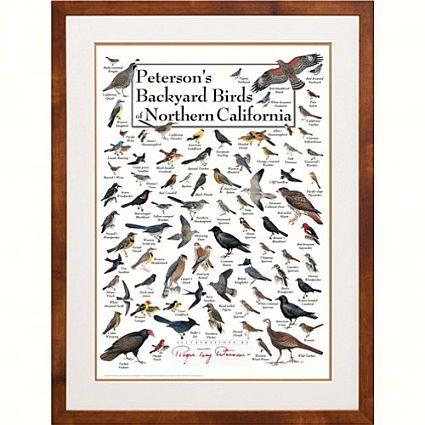 Peterson's Birds of Northern California Poster | Backyard ...