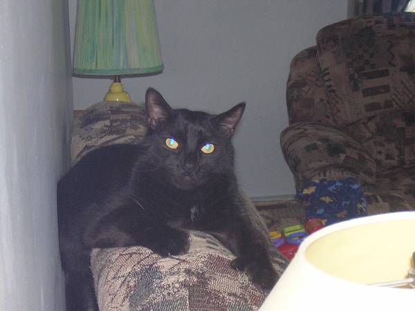 Missing Black Cat (Vernon, CT) https//hartford.craigslist