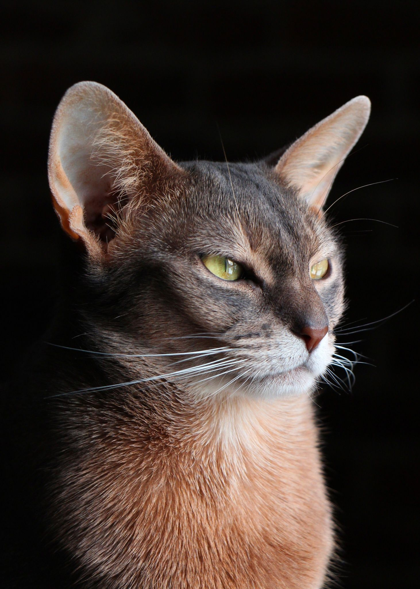 35 Cats With Totally Cool Markings | Domestic Cats 'n ...