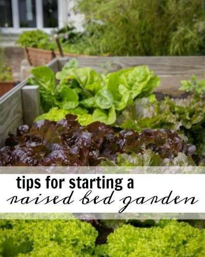 Tips For Starting A Raised Bed Garden