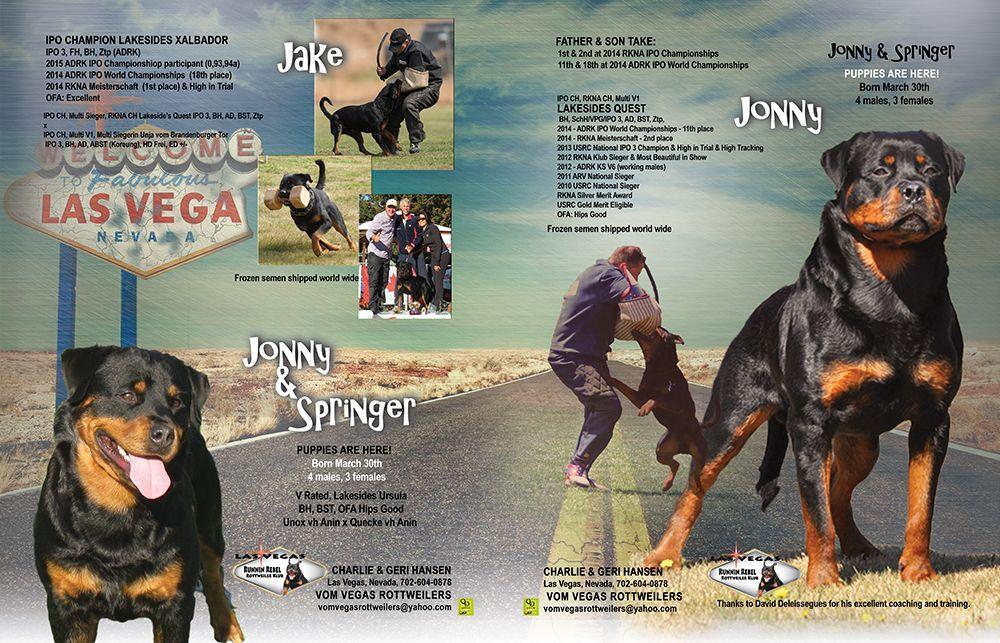 Puppies Are Here Vom Vegas Rottweilers Charlie Hansen Las Vegas