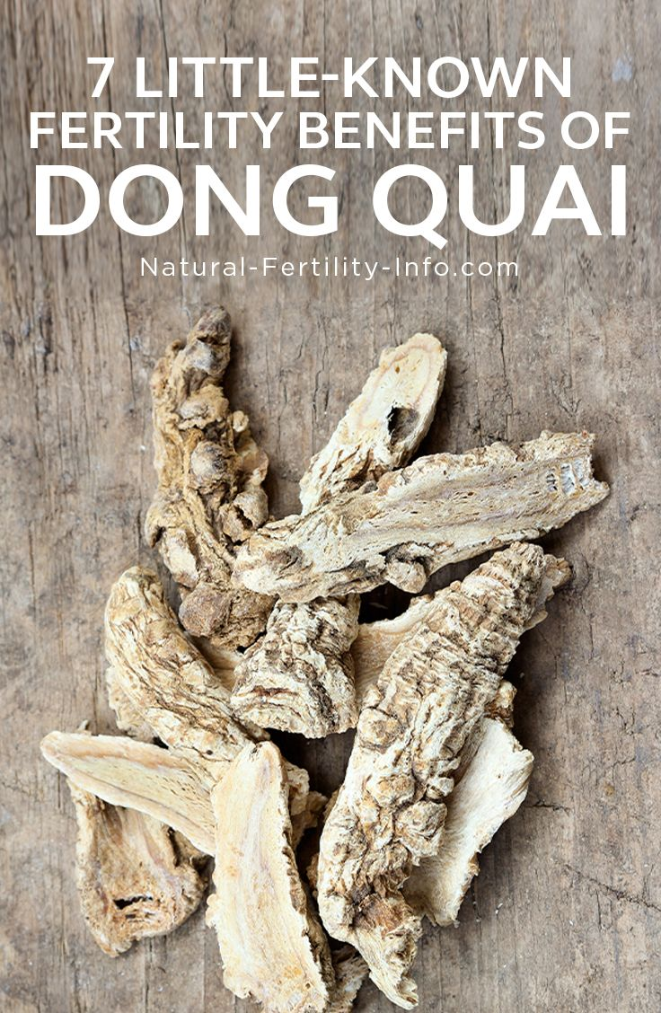 Chinese health herbal medicine supplement - Dong Quai Angelica Sinensis Is A Tonic Herb Used And Revered In Traditional Chinese Medicine To Restore Healthy Order To The Body