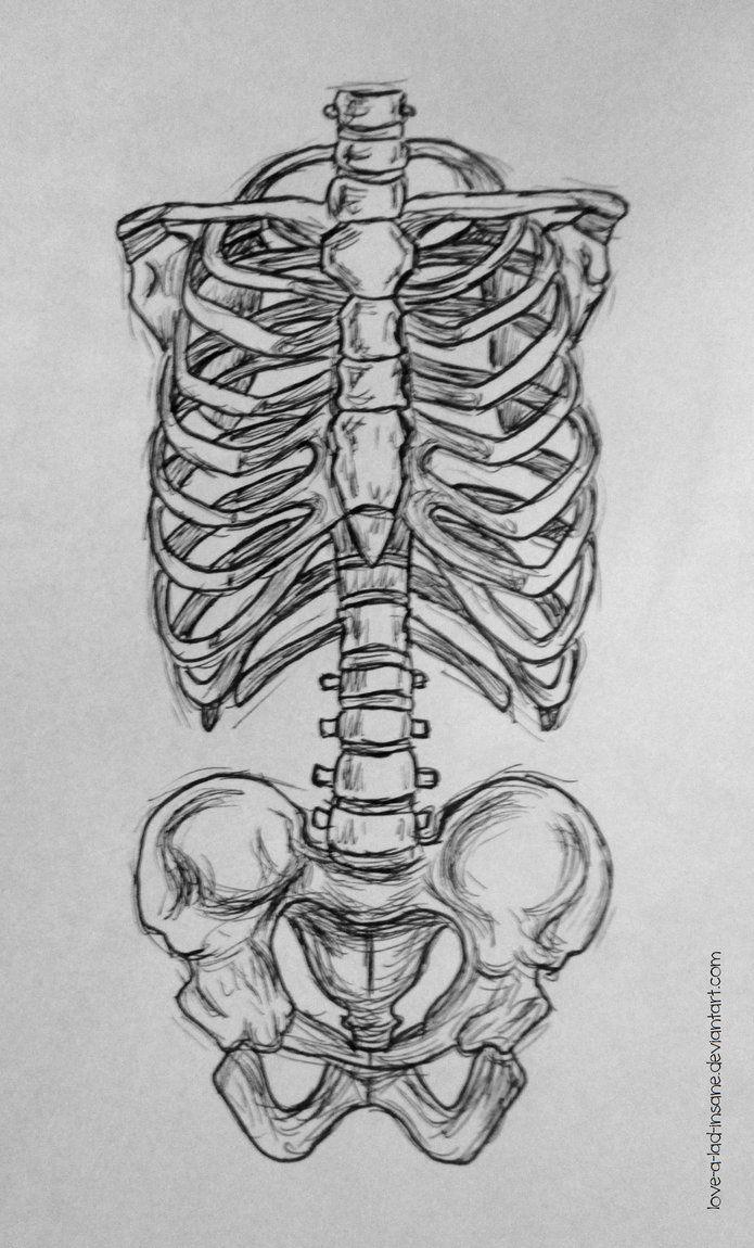 Rib Cage Drawing Art : drawing, Ribcage, Pelvis, Sketch, Drawing,, Skeleton, Drawings,, Pencil