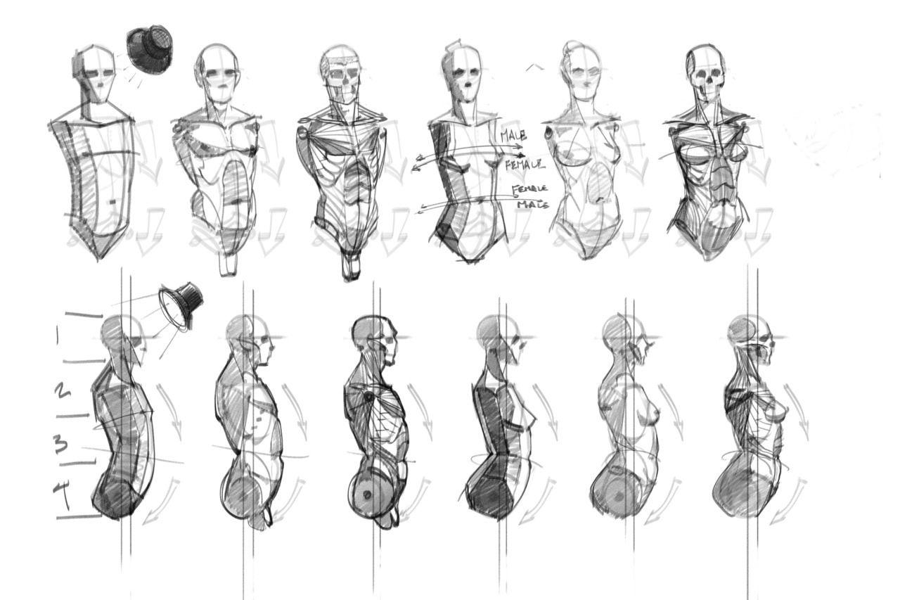 Anatomy for Artists. | Anatomy for Artists | Pinterest | Anatomy and ...