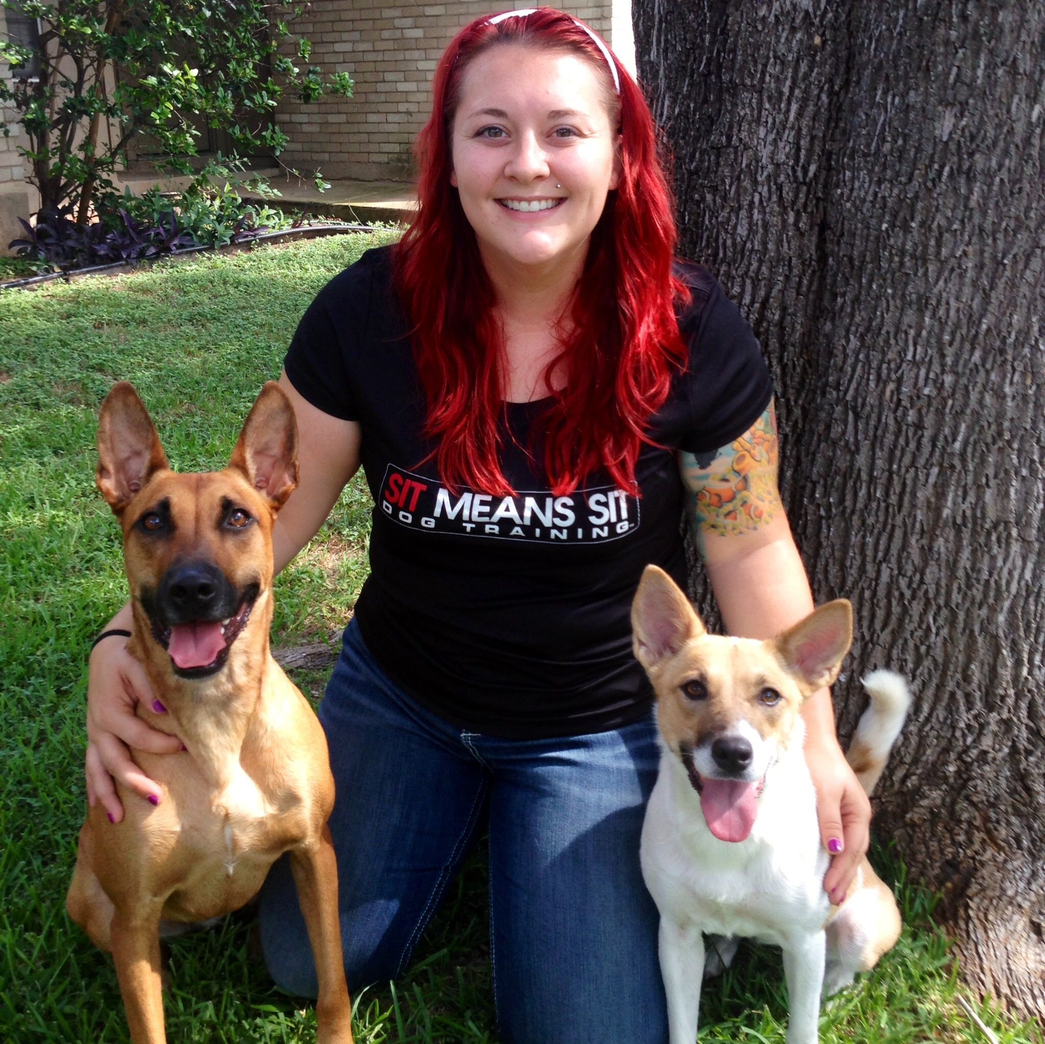 Dog Training Obedience Programs Austin San Antonio Tx Sit