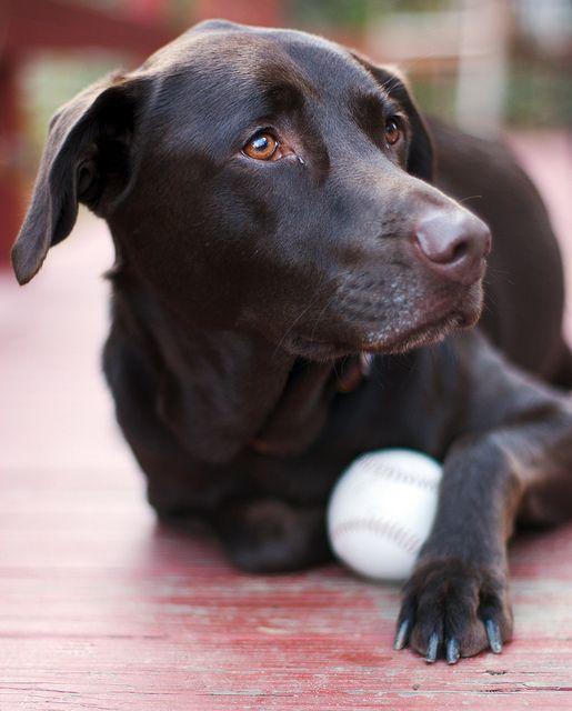 Que Faire De Son Chien Mort : faire, chien, Comment, Surmonter, Chien, Mort,, Chien,, Photo