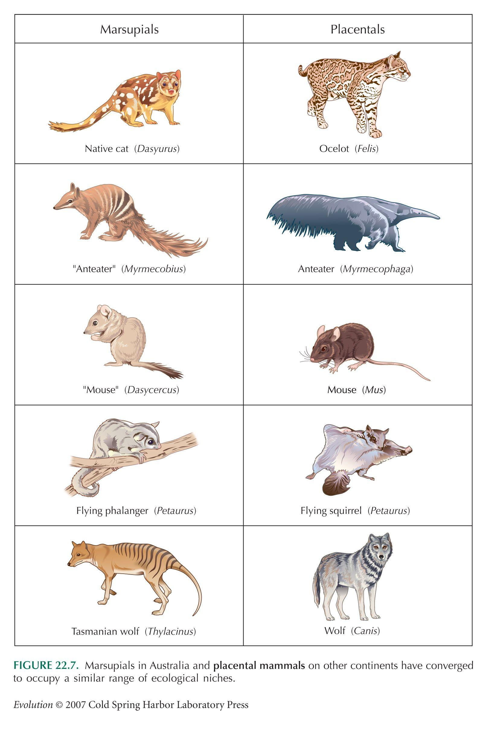 Marsupials And Placentals