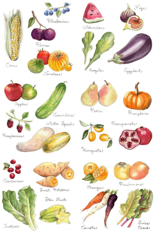 fruits and vegetables print by little canoe bilder gem se u obst pinterest wasserfarben. Black Bedroom Furniture Sets. Home Design Ideas
