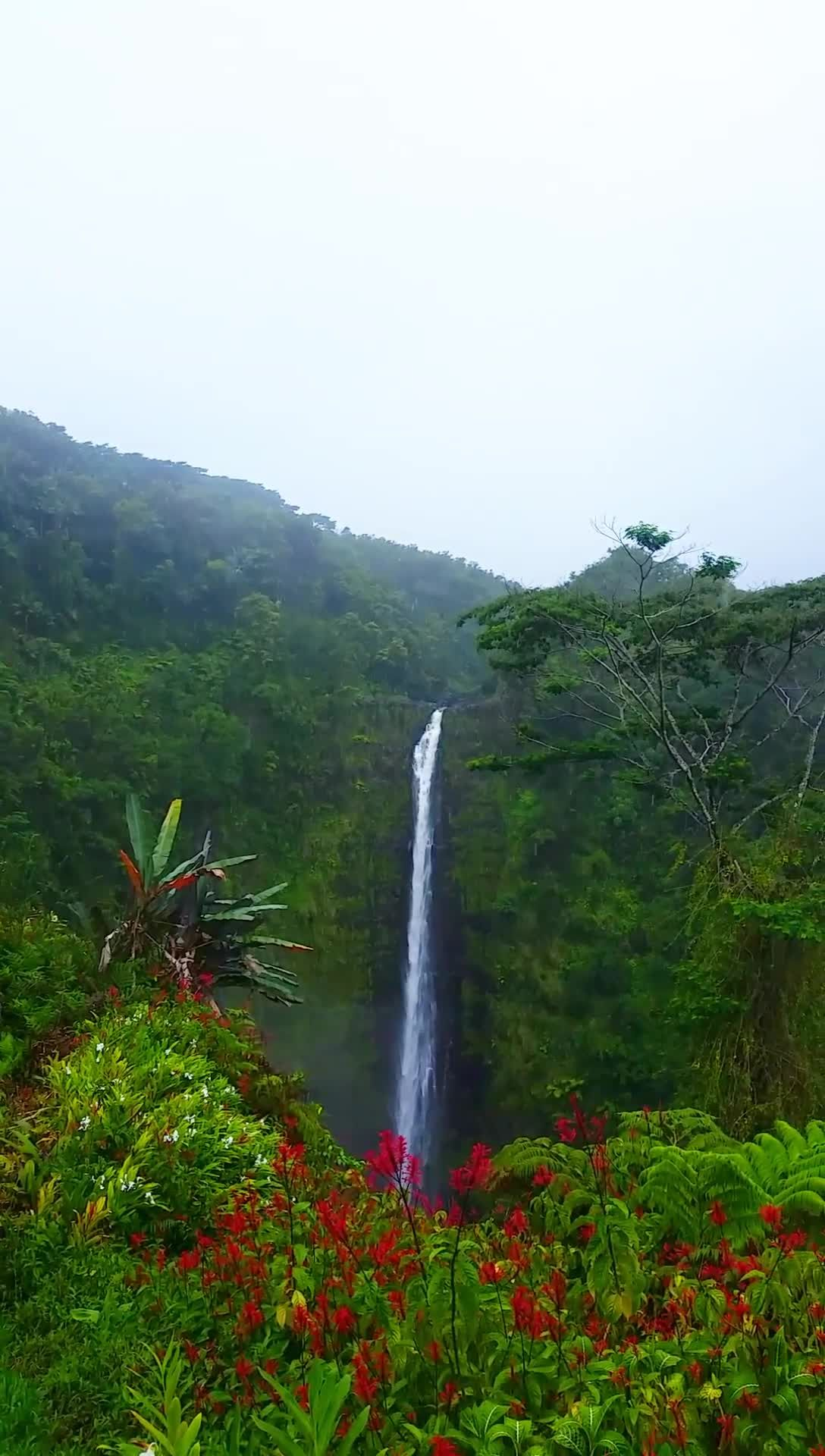 Travel Hawaii video, vacations ideas. Akaka Falls. best waterfall hikes in Hawaii. best things to do in Big Island, near hilo or day trip from kona. state park on big island waterfall hiking trail. Outdoor travel tips. beautiful places for world bucket list, wanderlust inspiration, tropical islands, pictures, photography. waterfalls in the US. usa. united states. #flashpackingamerica