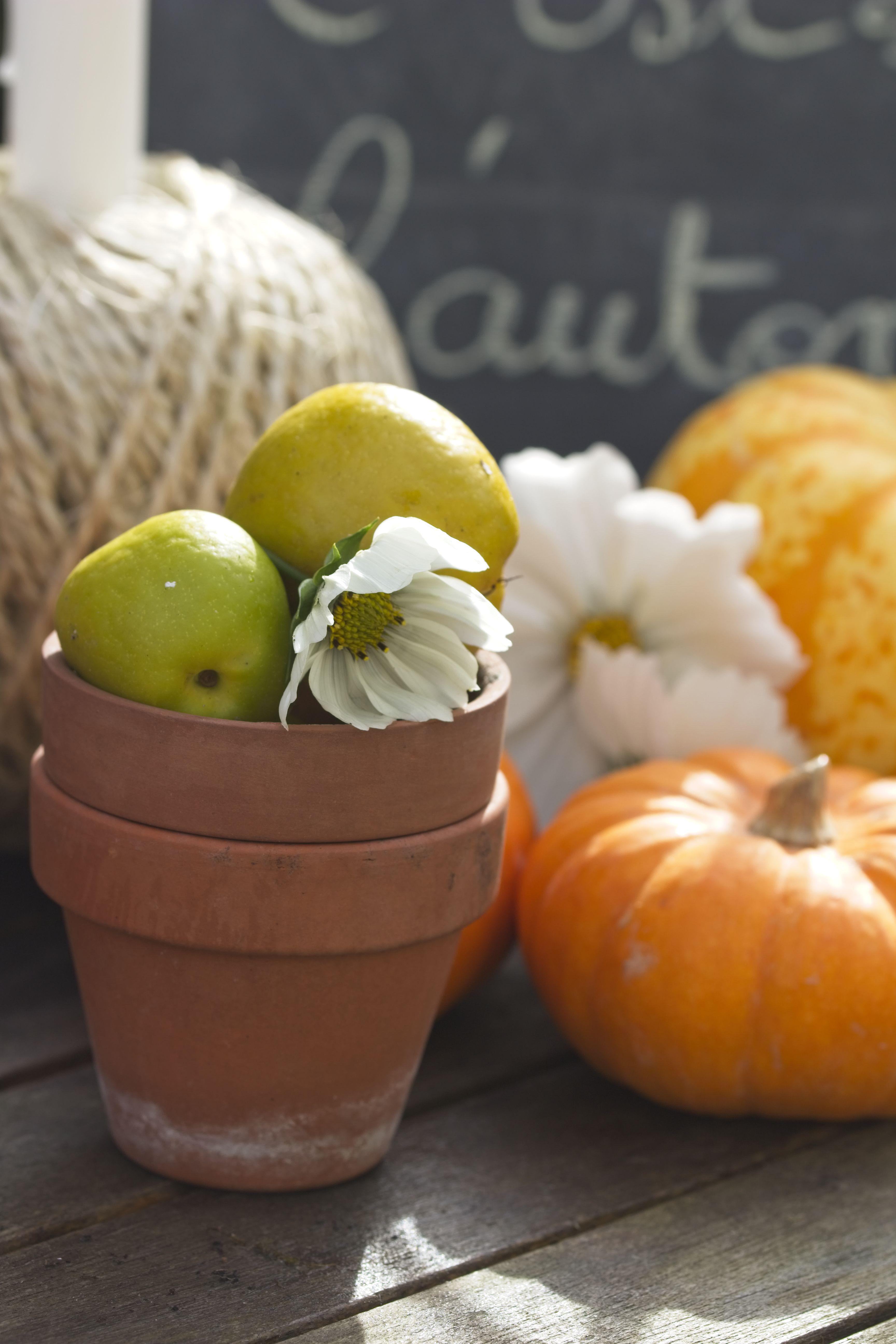 Comment décorer son jardin en automne ? Comment décorer