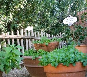 How To Grow Herbs In Tucson