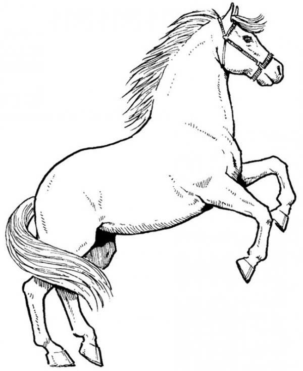 Horse Awesome Male Horse In Horses Coloring Page Horse