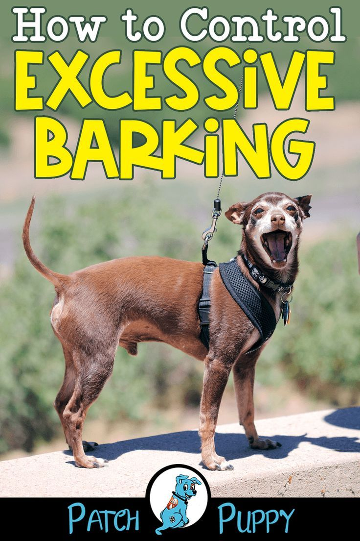 How to control excessive barking train your dog not to