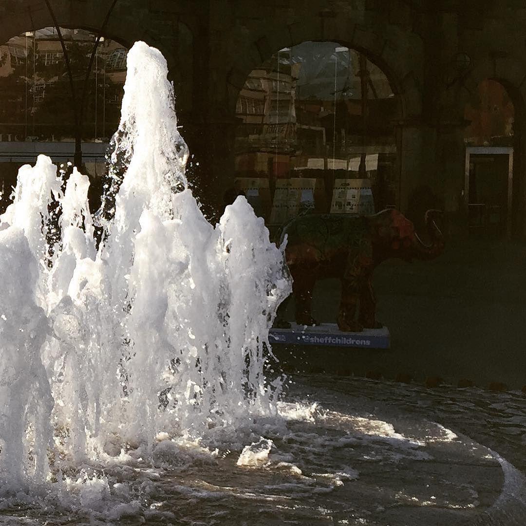 #herdofsheffield morning watering hole