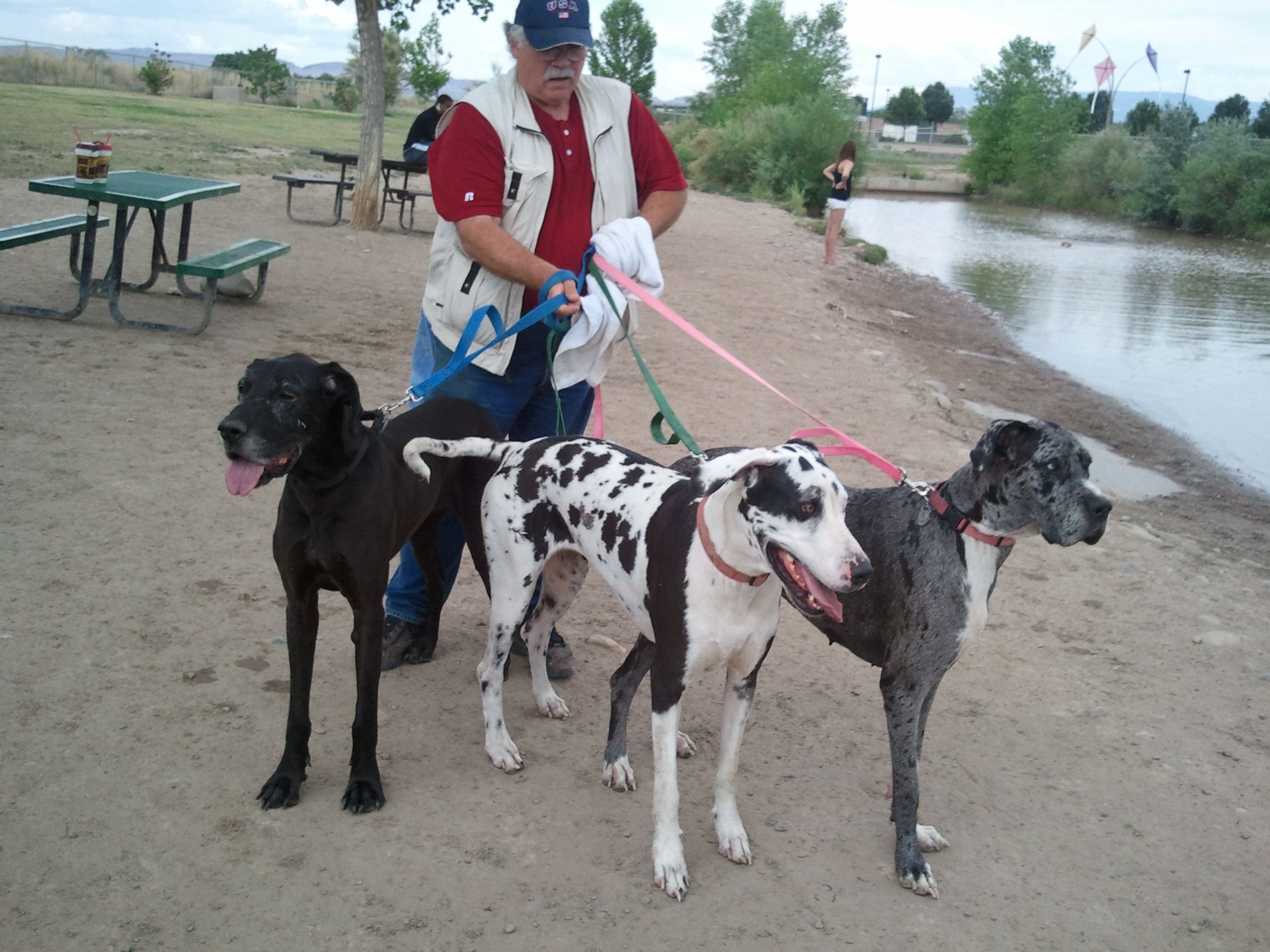 Our Great Danes at the Grand Junction CO dog park. Great